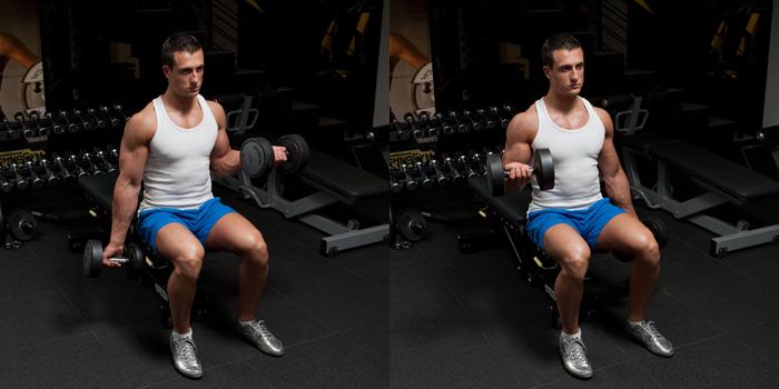 http://way4you.com.ua/images/upload/way4you_biceps.jpg